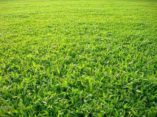 cây trồng viền