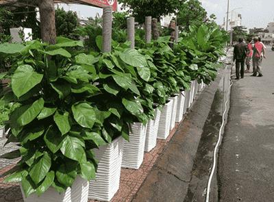 Cho thuê cây cảnh sự kiện Hải Phòng